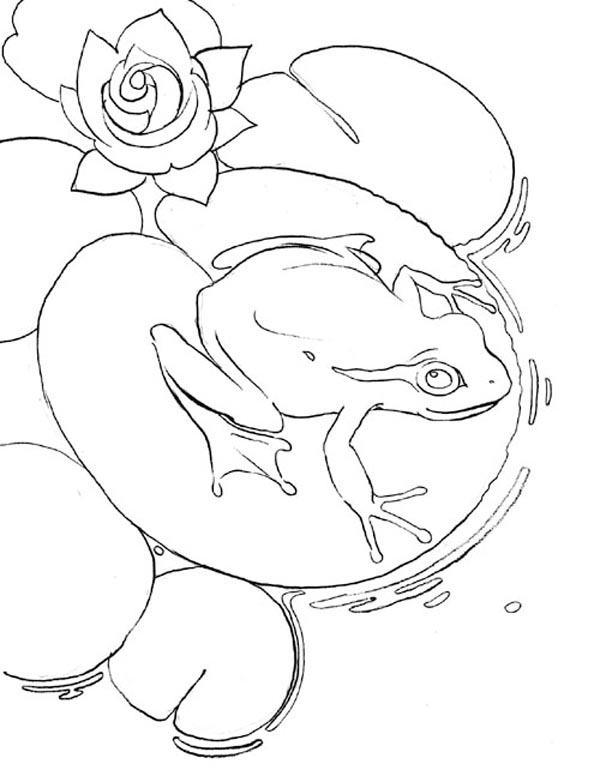 Kids Korner Free Coloring Pages  Frog on a Lily Pad